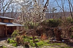 moonshadow at sequatchie valley institute, natural building, Permaculture, nature, garden, blossom, springtime, hiking, get outdoors