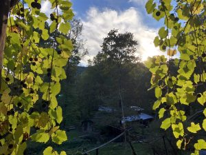 Muscadines at Sunset with View of Moonshadow at SVI