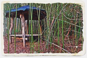 Paw Paw Pagoda in the Bamboo Forest Best Picnic Spot